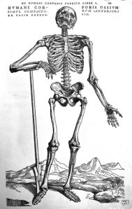 Humani Corporis Ossium